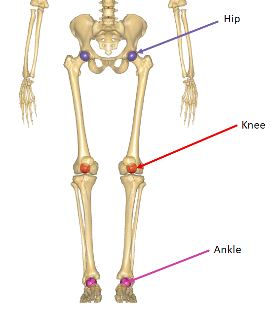 Joints of Lower Extremity